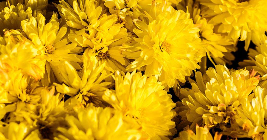 giallo brand branding marketing colori psicologia colori