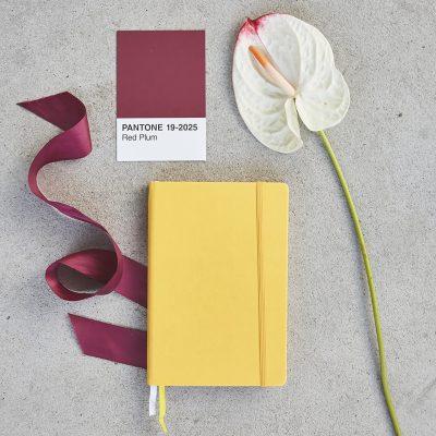 ayame corso online strategia di brand personal brandnemawashi studio coltura di brand radici per fiorire personal branding logo marchio